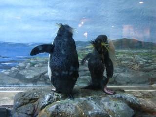 フリーズペンギン